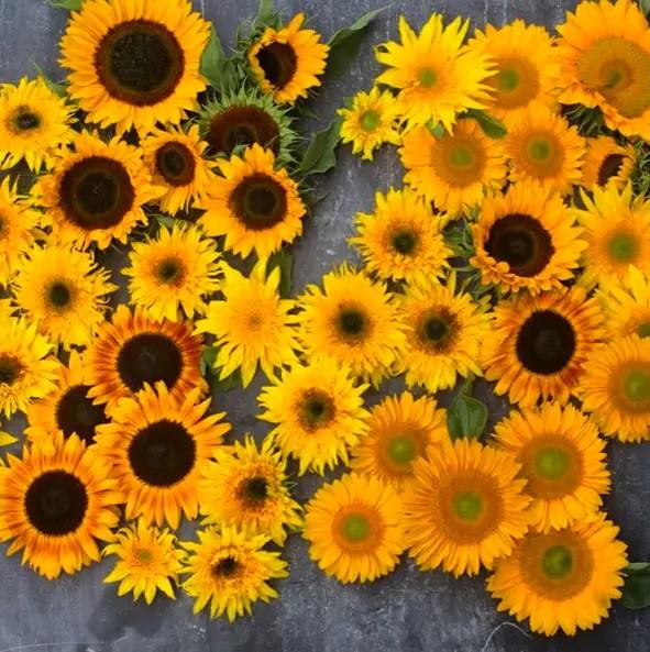 floret flower 2016-09-01 19.21.19