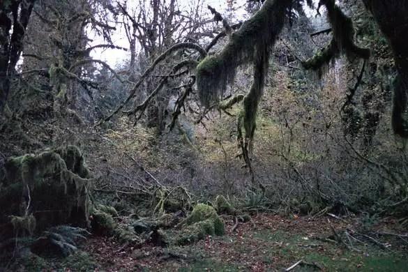 bomen van mos4
