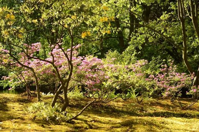 Japanse Tuin 9