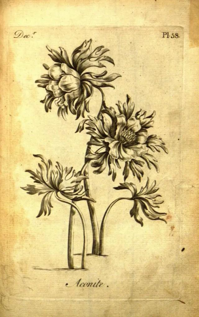 The Florist 10