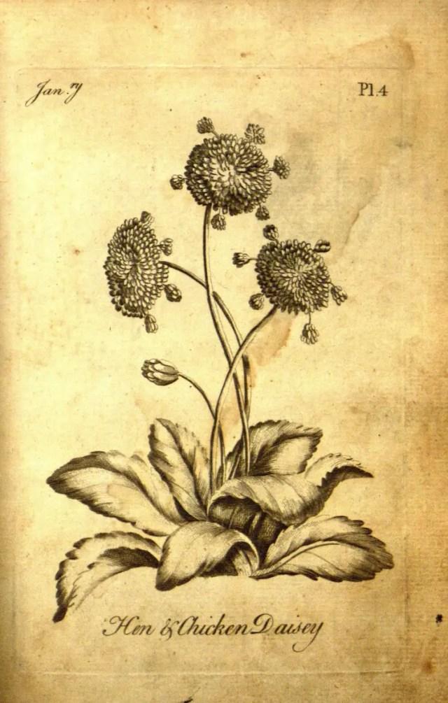 The Florist 9
