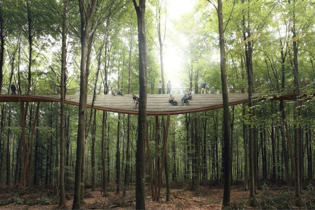 Treetop 4