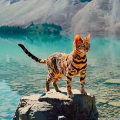 Deze kat reist met haar baasje door Canada