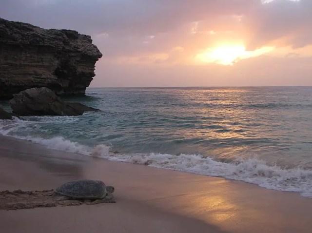 schildpadden oman