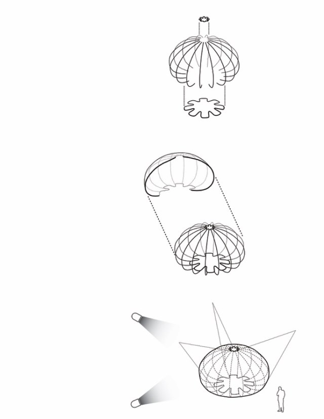 urchin 7