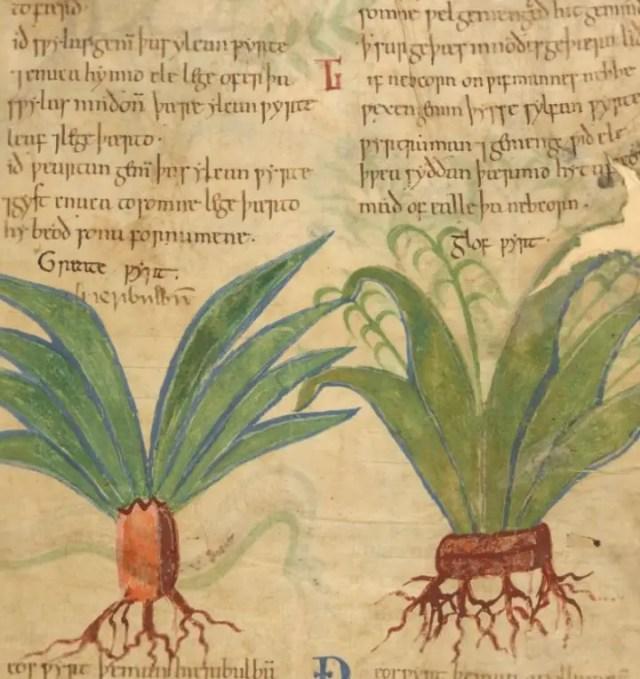 herbal 4