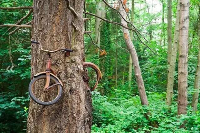 fiets vergroeid met boom