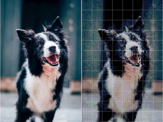 hond borduur 2