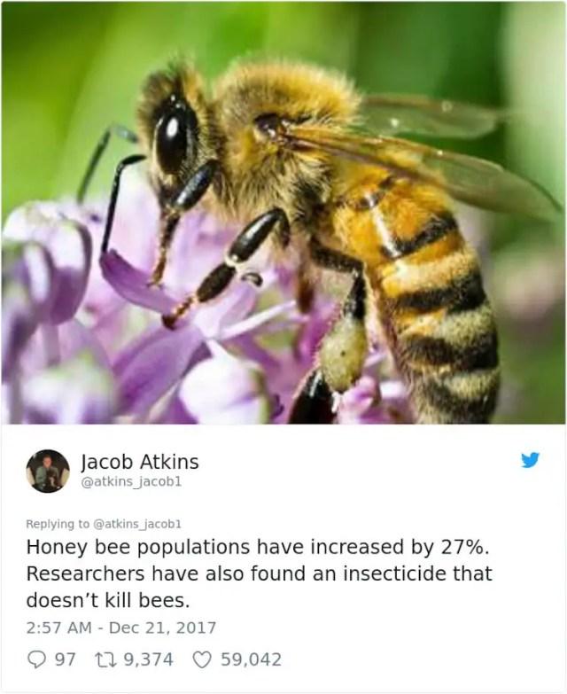 Jacob Atkins - honey bee