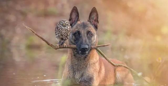 Zo ziet een bijzondere vriendschap tussen een hond en een uil eruit
