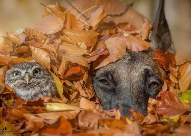 onder bladeren