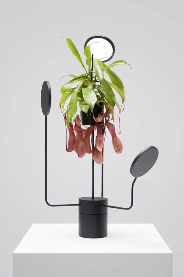 planten licht design 5