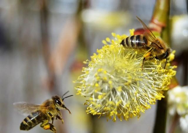 Bijen zijn belangrijk 1