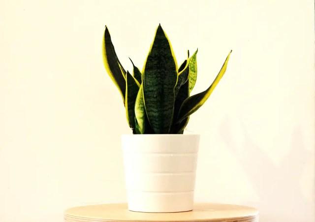 makkelijke planten 2