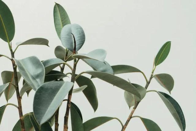 makkelijke planten 6