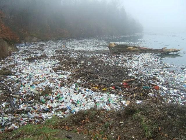 plastic-etende bacterie 7