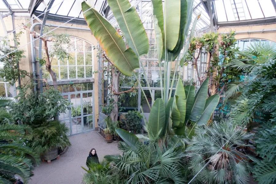 Botanische Tuin Amsterdam : De mooiste botanische tuinen in nederland paradijsvogels magazine