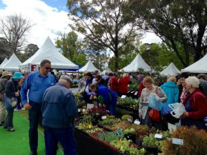 Busy Coachwood sales tables at Plant Lovers Fair Kariong