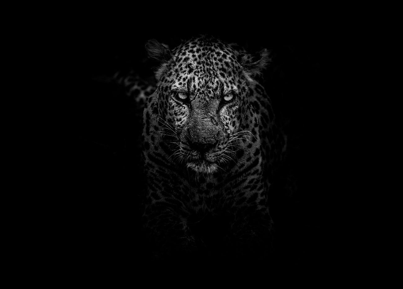 jaguar-car-poem