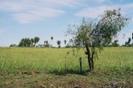 landschaft_20060524_1137789444.JPG