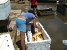 Fischkauf24.jpg