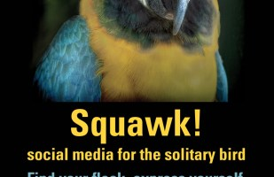 Squawk! Social Media for Solitary Birds
