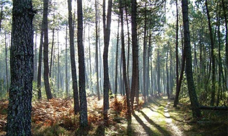 """Résultat de recherche d'images pour """"route forêt landes"""""""