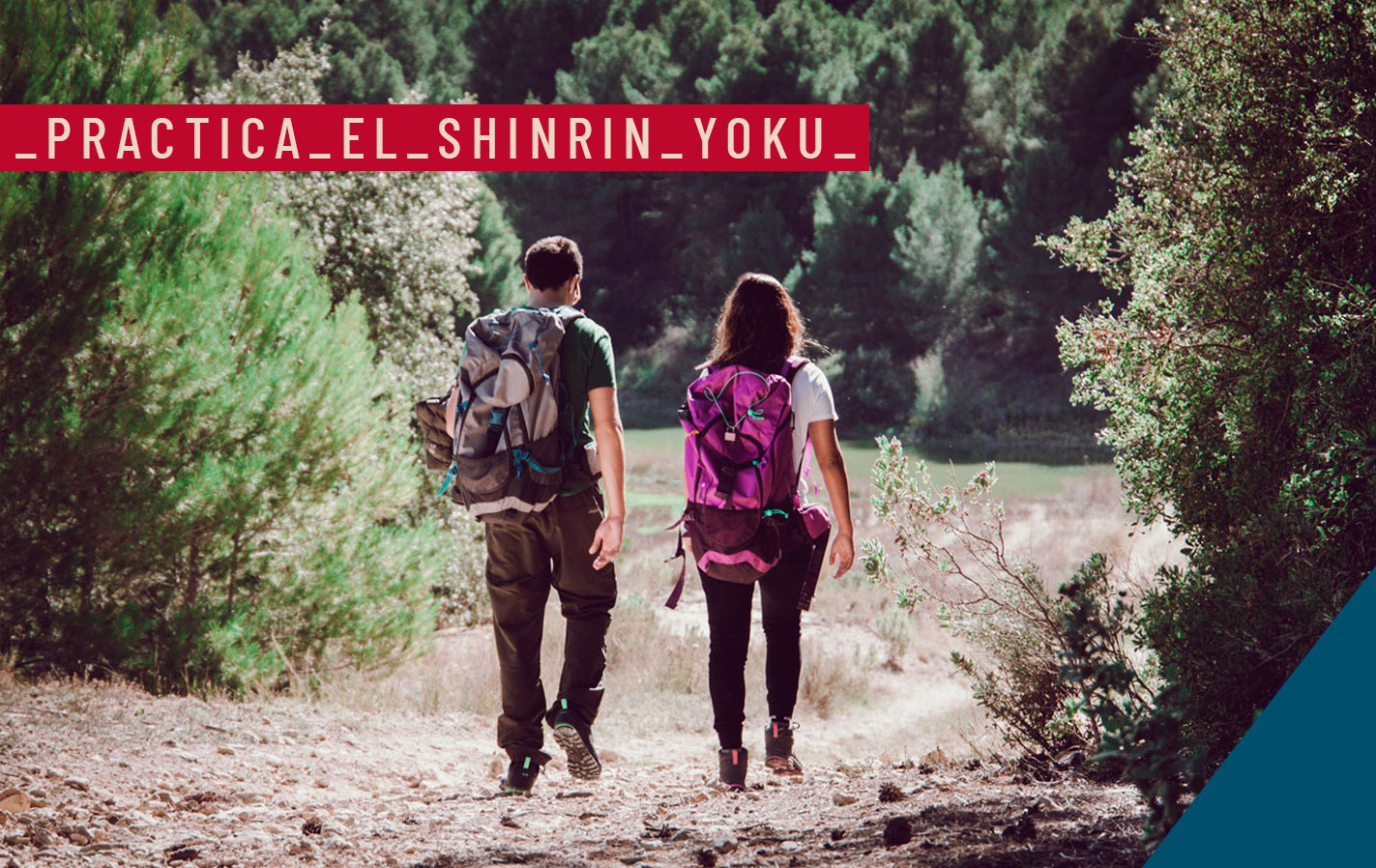 SHINRIN YOKU BAÑO BOSQUE BLOG PAREDES