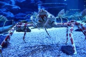 aquarium osaka 3