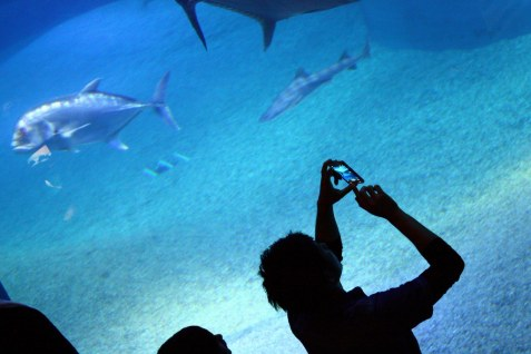 aquarium osaka 5