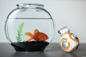 bb8_goldfish_1_legal_1200_801