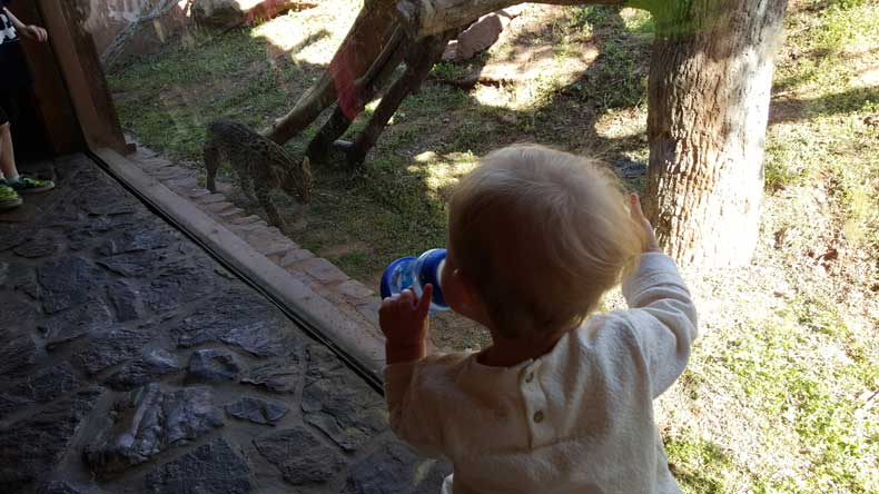 Parenthood and Passports - Should Zoos Be Banned