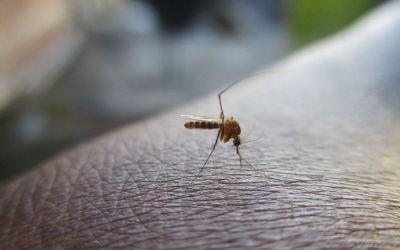 Is Zika virus still a risk for pregnant women?