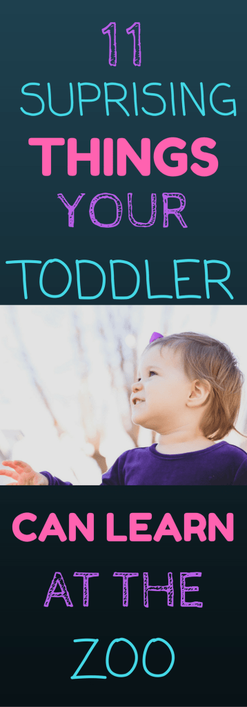 11 SURPRISING THINGS YOUR TODDLER CAN LEARN AT THE ZOO