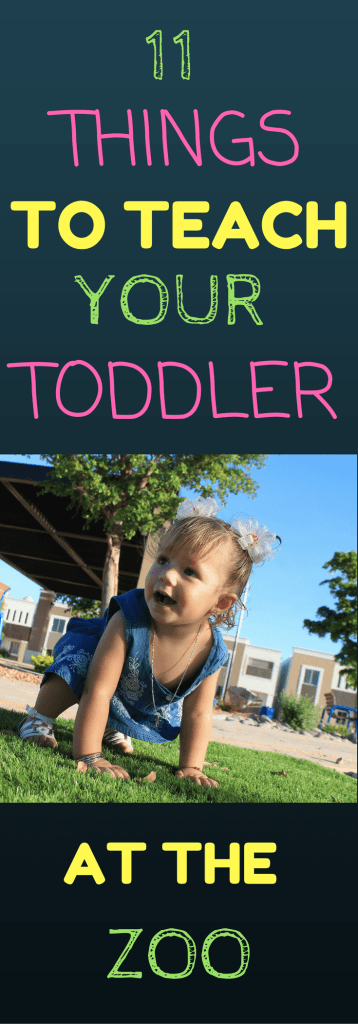 11 THINGS YOUR TODDLER CAN LEARN AT THE ZOO