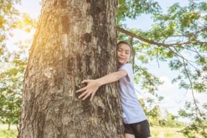 Sentir l'énergie des arbres