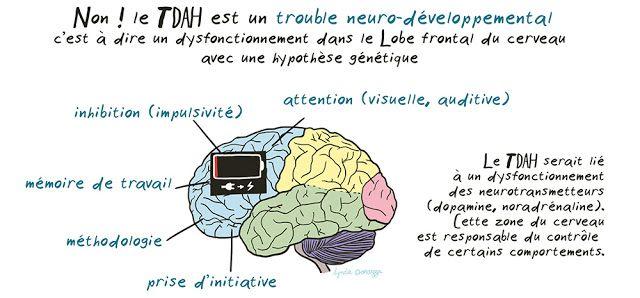 TDAH trouble neuro-developpemental