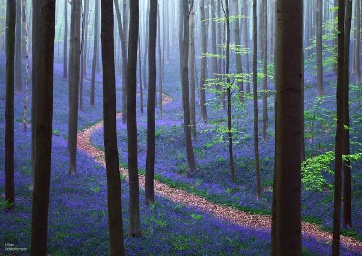 La forêt magique d'Hallerbos - Belgiqueblog-de-voyageforet-bleue-hallebors-belgiquebernard-delhalle-nature-foret-voyage-en-famille13006545_10209226317321026_4392054557391692088_n