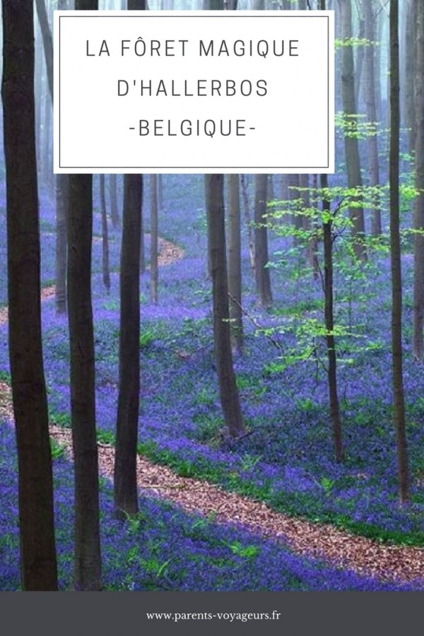 foret magique d'hallerbos Belgique