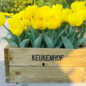 visiter Kukenhof avec des enfants