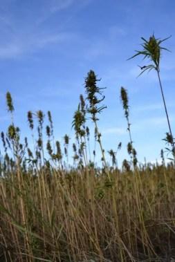 blog-de-voyage-campagne-beauce-voyage-en-famille-nature-champs-champs-de-ble-voyage-et-enfantthumb_dsc_0563_1024
