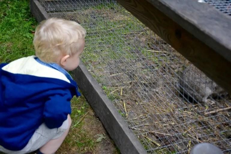 blog-de-voyage-voyage-en-famille-parents-blog-de-maman-voyage-avec-bebe-enfants-nord-musee-de-plein-air-villeneuve-dascq-parc-activite-en-famille-bouger-en-famille-thumb_dsc_0287_1024