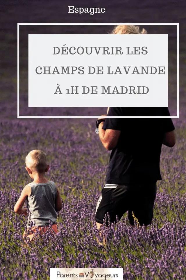 DÉCOUVRIR LES CHAMPS DE LAVANDE À 1H DE MADRID