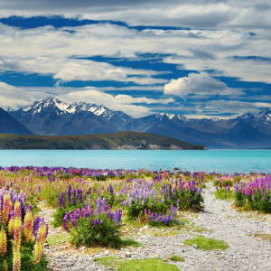 Nouvelle-Zélande en famille : préparer son voyage.
