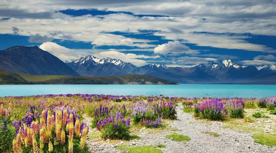 Road trip en Nouvelle-Zélande en famille : préparer son roadtrip
