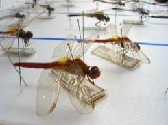 Τα Καταπληκτικά Έντομα!
