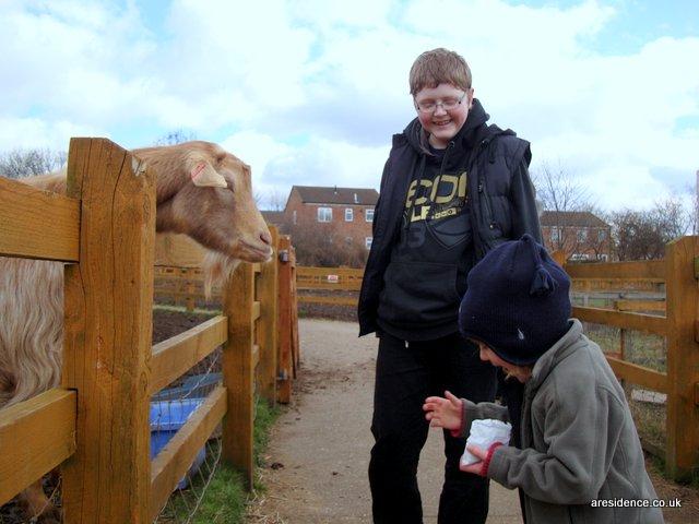 Mr G feeds the goats at Stonebridge