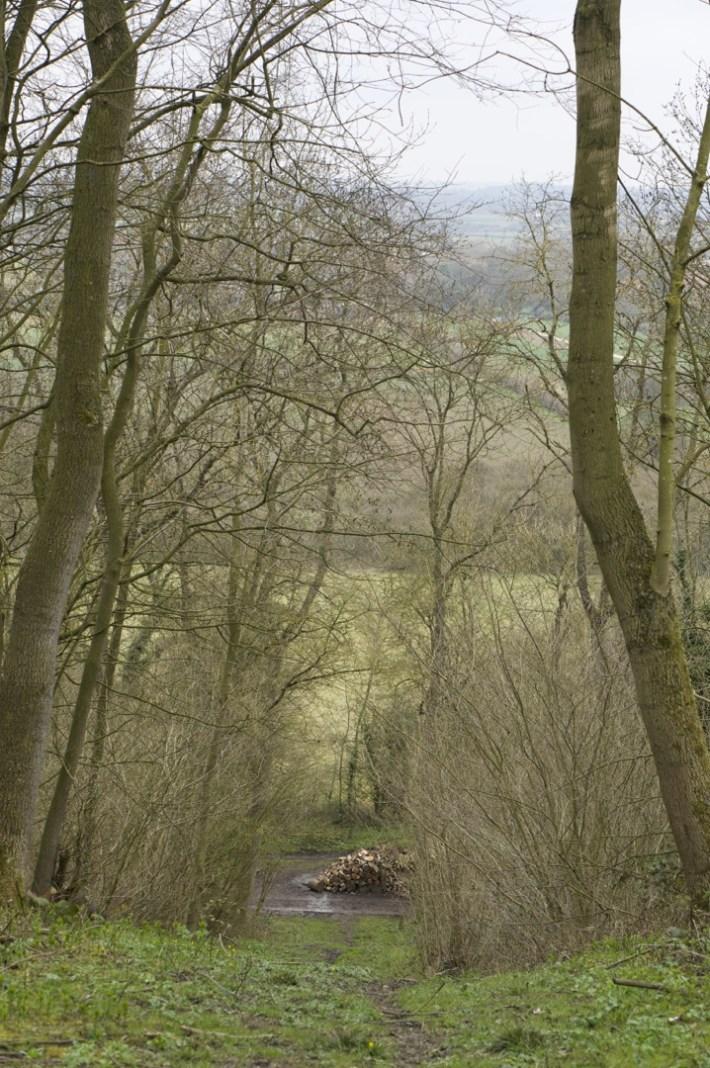 Bunny Wood - 09