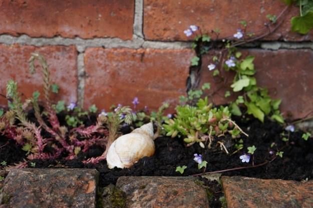 Garden-in-May-09