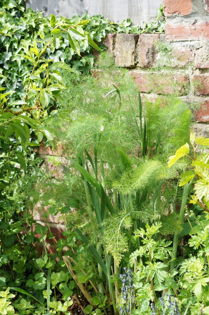 Garden-in-May-14